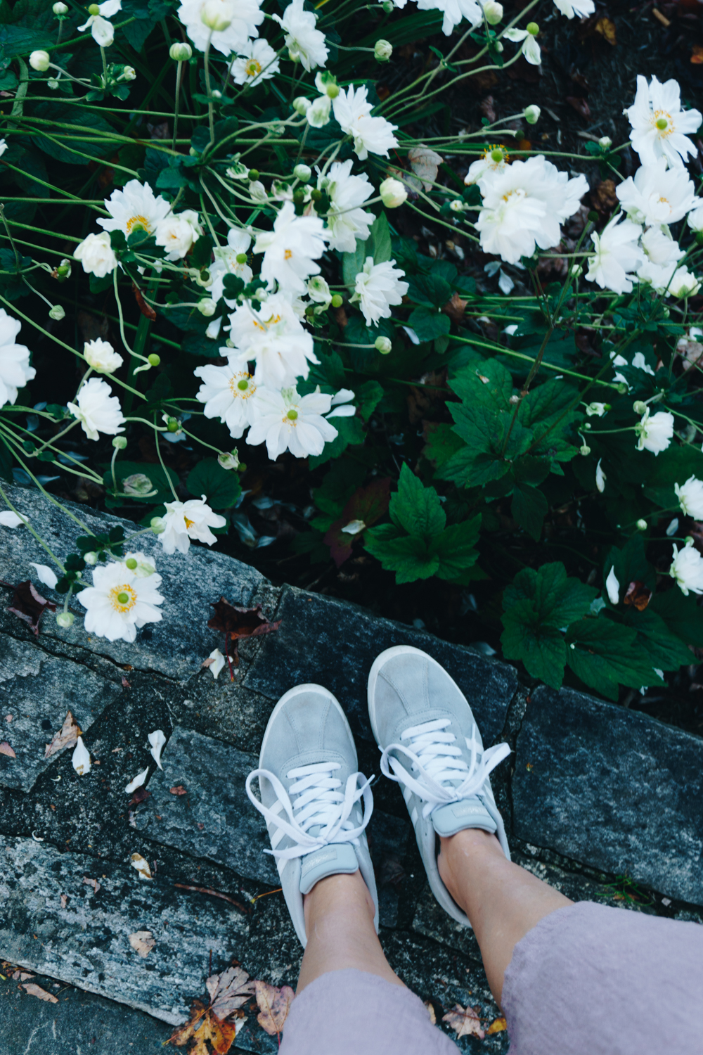 blowing rock nc flowers shoes fashion rgdaily blog