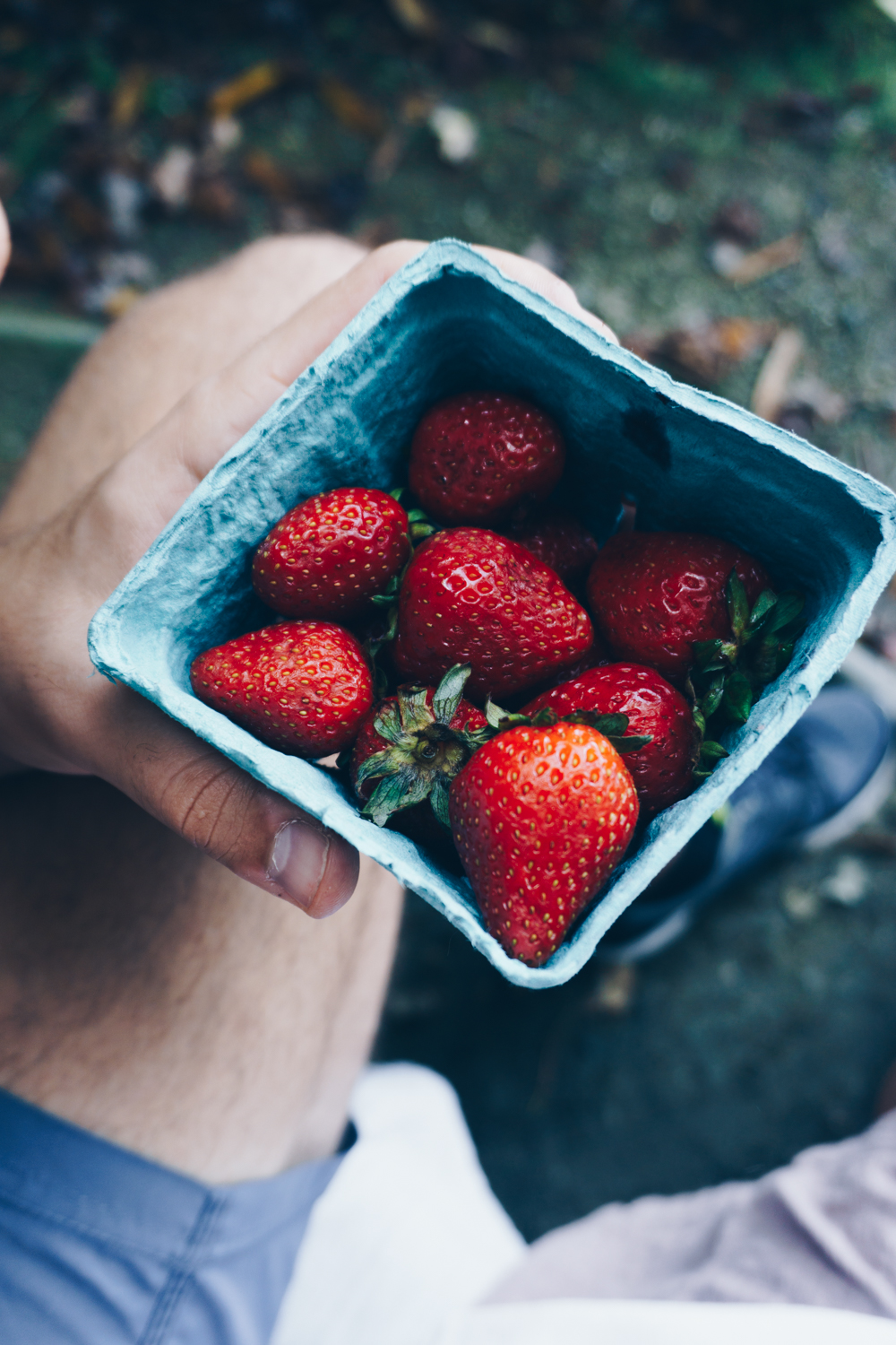 fall picnic blue ridge mountains adventures strawberries rgdaily blog