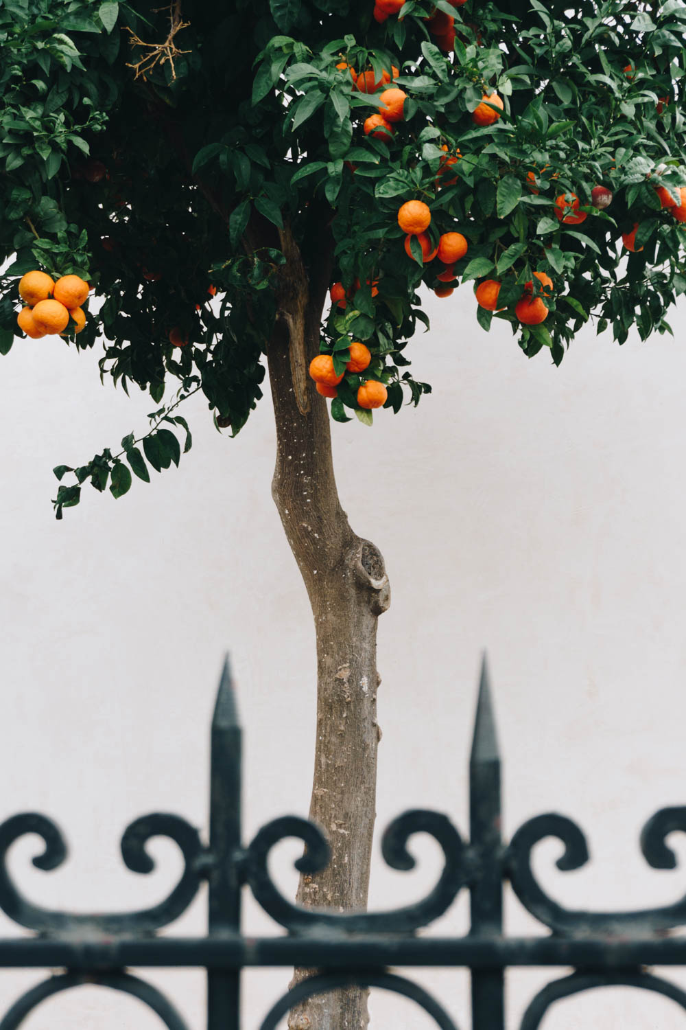 athens greece travel guide plaka orange trees rgdaily blog rebecca goddard