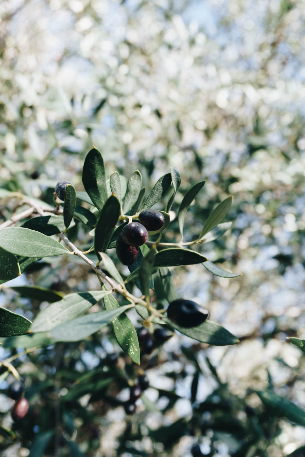 athens greece travel guide olives rgdaily blog rebecca goddard